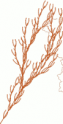 arbre à saucisses